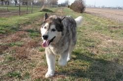 Electrobraid Dog Fence