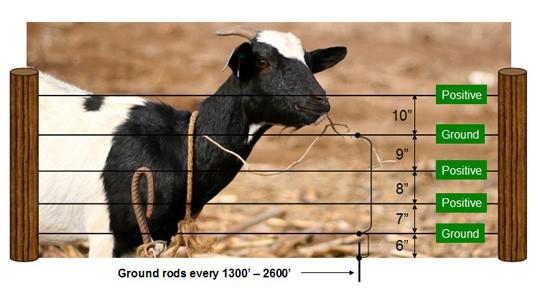 Electrobraid Fence for Goats