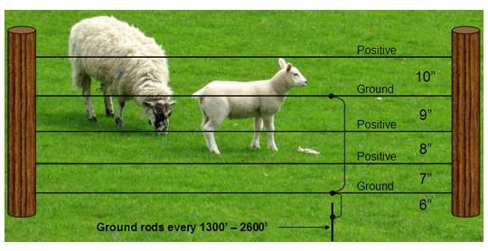 Electrobraid Sheep Fence